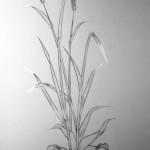 pjesk. cvijece